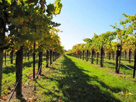 California Half Day Wine Country Tour - Sonoma Valley