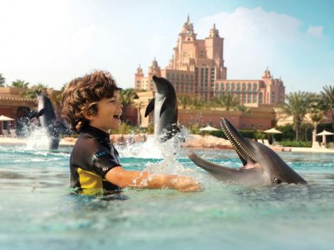 Dolphin Bay At Atlantis The Palm Swim With Dolphins In Dubai