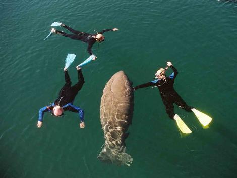 Florida Adventure Tour – Swim with Manatees