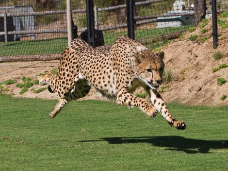 Go San Diego Card zoo safari park