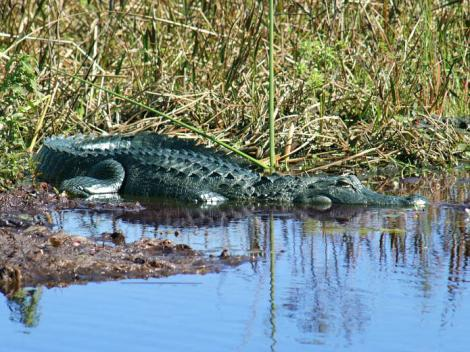 Kennedy Space Center and Airboat Safari Tour