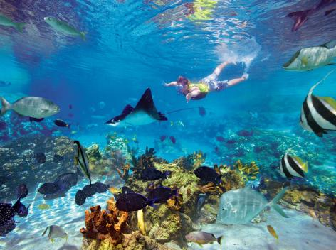 Free Underwater Camera with Discovery Cove Bookings