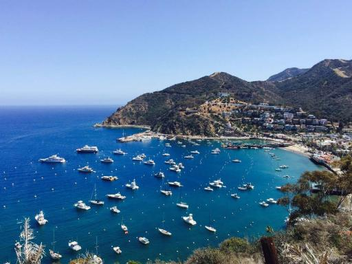 Catalina Island - A Day In Paradise