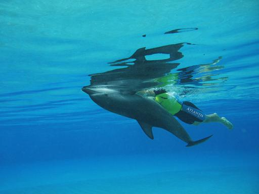 Dolphin Bay at Atlantis The Palm | Swim with Dolphins in Dubai