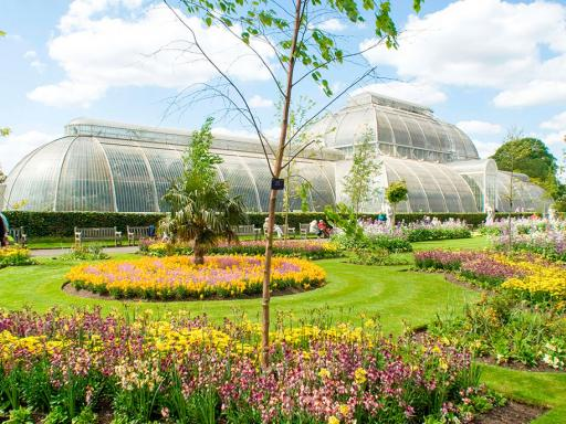Visit to Kew Gardens and Palace with Cream Tea for Two