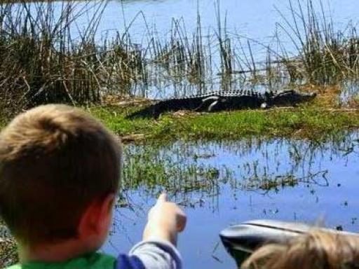 Wild Florida Airboat Rides & Gator Park