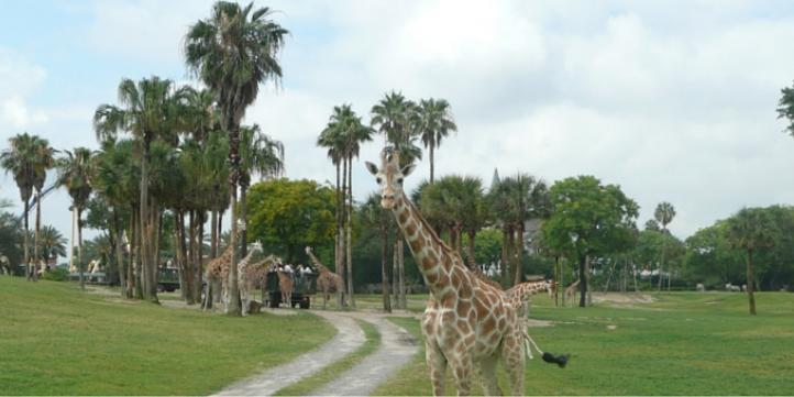 5 Quirky Reasons Busch Gardens Isn T Just About The Coasters