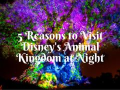5 Reasons to Visit Animal Kingdom at Night See the park in a whole new 'light'!