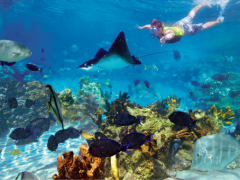7 Things You Didn't Know Were FREE with Your Discovery Cove Tickets