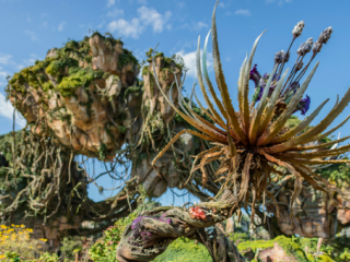 5 Things You Must Do at Pandora- The World of Avatar