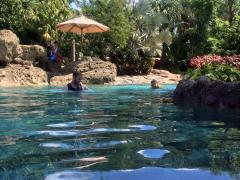 Discovery Cove – It's Not All About The Dolphins! Make sure you don't miss out on what could be the best day of your holiday!
