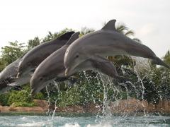 A Day at Discovery Cove, Orlando's Tropical Paradise