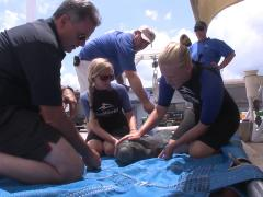SeaWorld Orlando Kicks Off Plastic-Blasting Campaign!