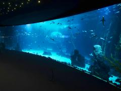 HUGE New Aquarium Opens in Gran Canaria ...with the world's largest viewing window...