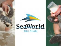 SeaWorld Set to Come to the UAE A new and exciting attraction....