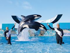 Shamu and trainers at SeaWorld Olrando