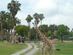5 Quirky Reasons Busch Gardens Isn't Just About The Coasters