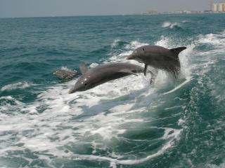Clearwater plus Dolphin Encounter