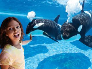 SeaWorld San Diego Day Tour from Anaheim
