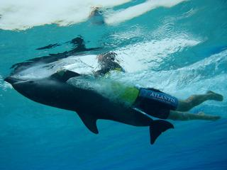 Atlantis Dolphin Adventure Deep Water Interaction at Dolphin Bay