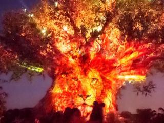 Disney After Hours at Disney's Animal Kingdom Park