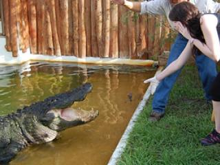 Gatorland Trainer for a Day