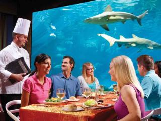 SeaWorld Orlando Ultimate VIP Tour
