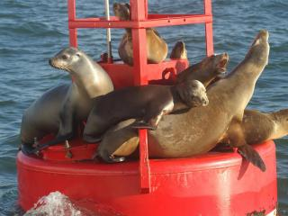 Two Hour San Diego Harbour Cruise & Sea Lion Adventure