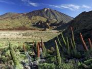 Mount Teide & Las Cañadas National Park