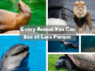 Every Animal You Can See at Loro Parque Tenerife