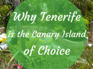 Why Tenerife is the Canary Island of choice
