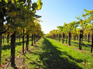 California Wine Country - Full Day Tour to Sonoma and Napa from San Francisco