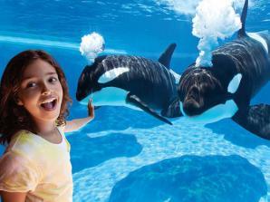 SeaWorld San Diego Day Tour from Anaheim